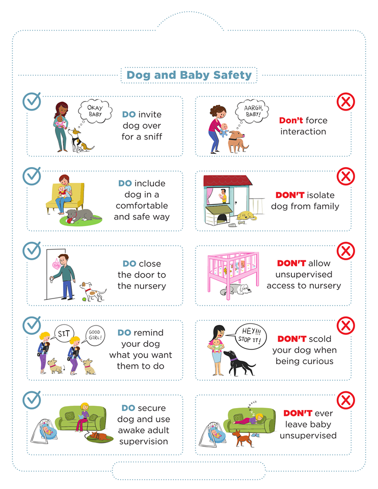 dog and baby poster