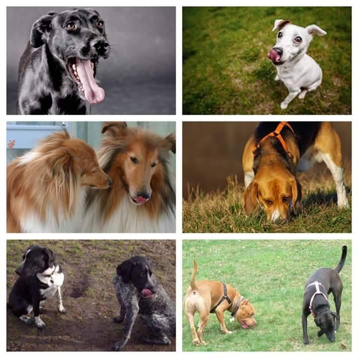 ¿Entiendes Lo Que Te Dice Tu Perro?